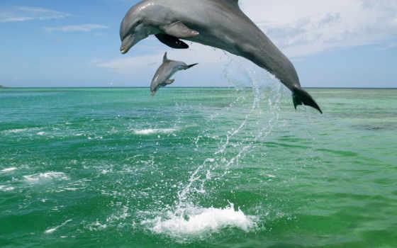 дельфины, прыгающие,