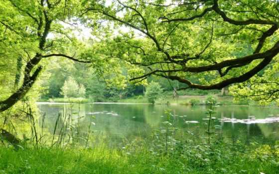 природа, лес, trees