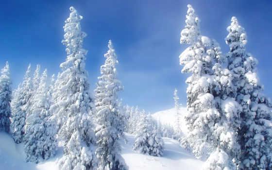 года, time, winter, природа, год, банка, картинка,