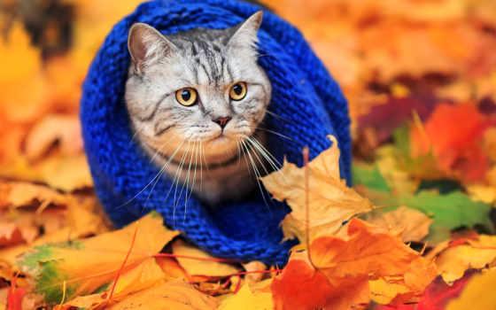 осень, occasion, грустный, wear, шарфик, только, сильно, that, тебя, заказать, шарф,
