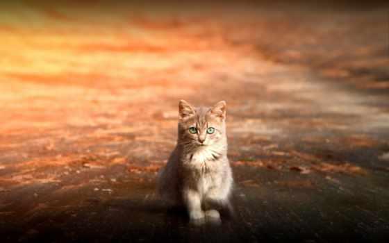 кот, котенок, nice, iphone, глазами, sit, зелёными, red, морда, лапа, взгляд,