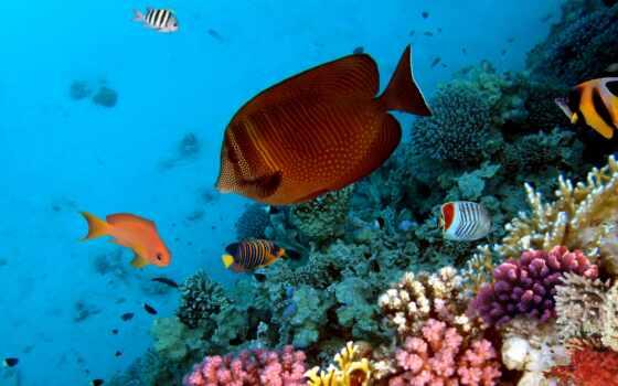 coral, fish, фотообои, риф, underwater,, море, аквариум, world