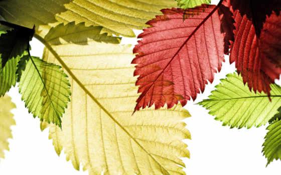 макро, листья Фон № 26555 разрешение 1920x1200