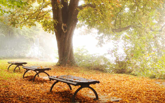 осень, природа Фон № 31559 разрешение 1920x1080