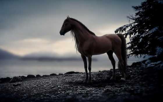 лошади, лошадь, коллекция