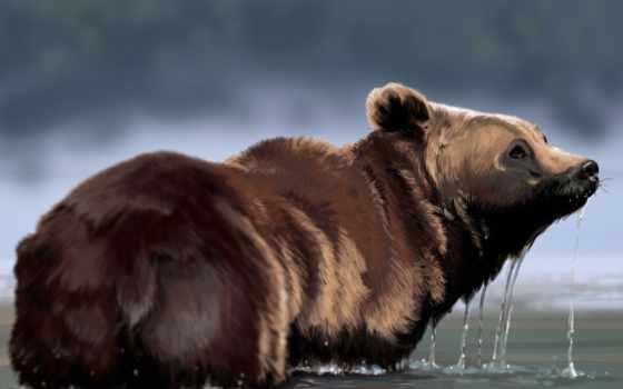 капли, voda, zhivotnye, качестве, медведи,