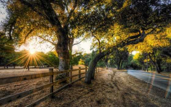 tapety, pulpit, krajobrazy, countryside, drzewa, darmowe, дрога, słońca, tapeta,