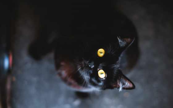 кот, black, черная, смотрит, взгляд, свет,