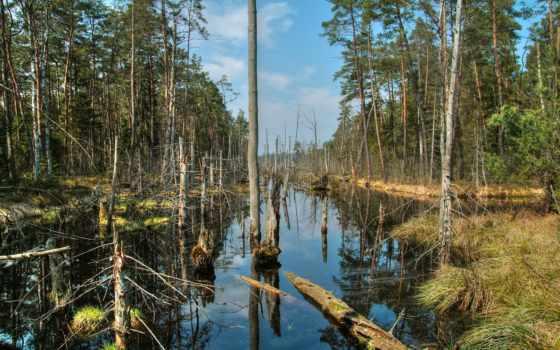 dead, marshes, природа, собраны, природные, rivers, тысяч, раздаче, дек, трава,