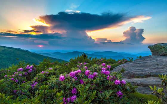 cvety, природа, закат, восход, горы, ответы, kingdom, пиратские, age, usa,