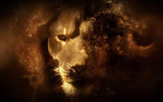 lion, рисунок, грива