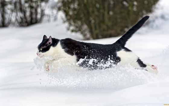 кот, бежит, winter