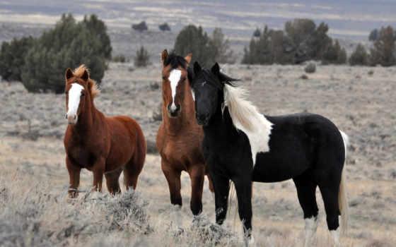 лошади, фотообои, stock, домашние,
