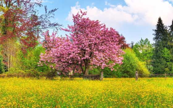 природа, красивый, весна, коллекция, фото, цветение, поле, free