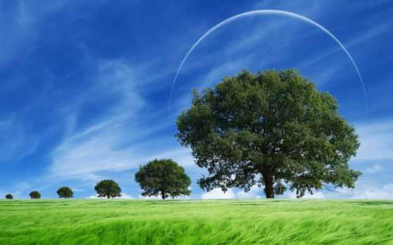 campo, ensolarado, parede, brisa, pantalla, papéis, campos, paisaje, cielo, soleado, fondos,