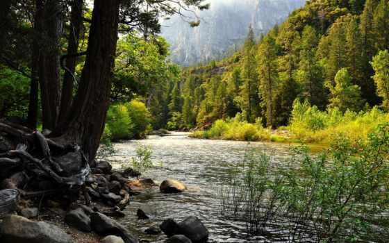 река, лес, woods