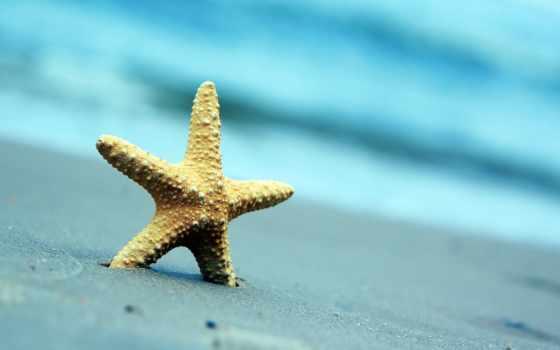 пляж, природа, море, star, морская, summer, песок, ракушки, широкоэкранные,