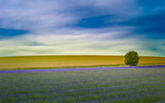 небо, совершенно, макро, поле, lavender, french, лавандовые, англии, margin, лавандовое,
