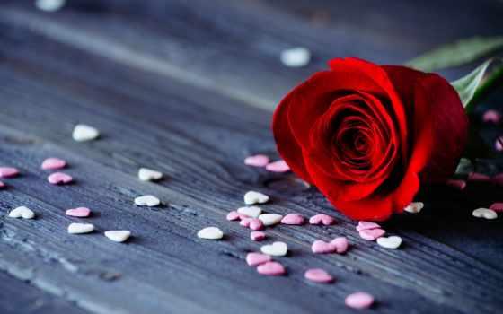 цветы, cvety, красивый
