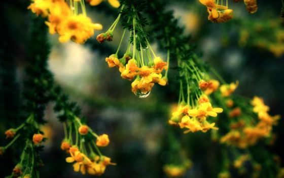 терапия, звуковая, resimleri, звуки, yağmur, damlası, gül, efeklektli, çiçek, аудиозапись, yaprak,