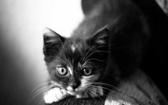 кот, animals, cats