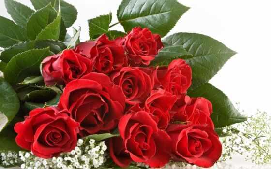 cute, поздравление, женщина, красивый, love, dnee, postcard, поздравить, девушка, весна