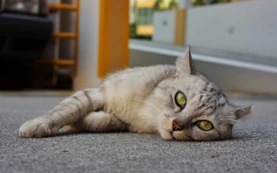 кот, отдыхает