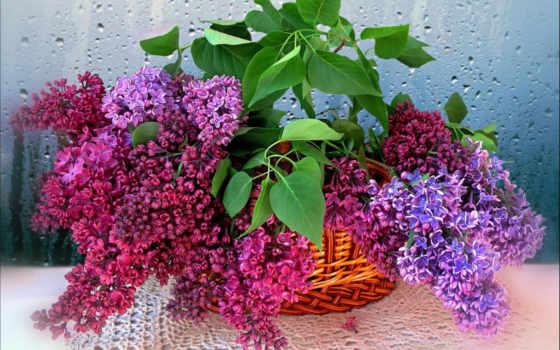 сиреневый, цветы Фон № 87976 разрешение 1920x1200