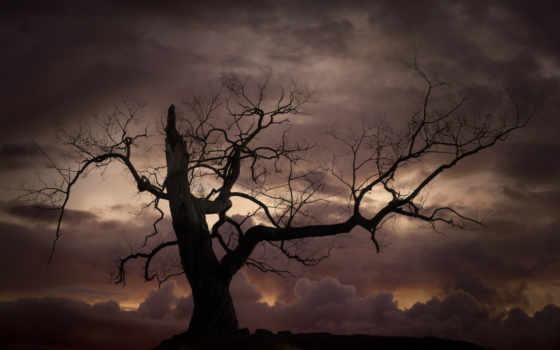 дерево, силуэт, bare, stock, фото, небо, против, закат, вектор,