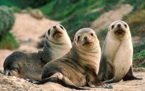 seals, морские