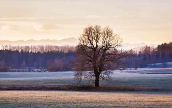 дерево, images, winter, popular, photos, страница, smartphone,