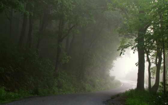 осень, tapeta, las, фермы, trees, виноградники, утро,