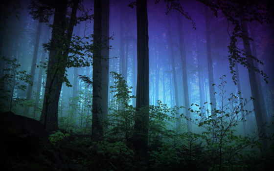 лес, trees, туман
