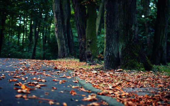 качестве, осень, флот, landscape, листва, природа, хорошие, картинка, качественные, предпросмотром,