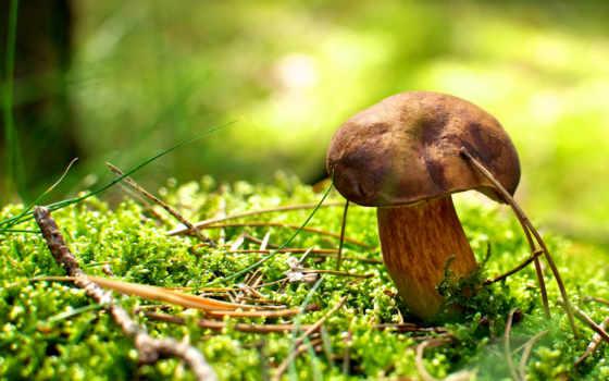 грибов, гриб, грибы,