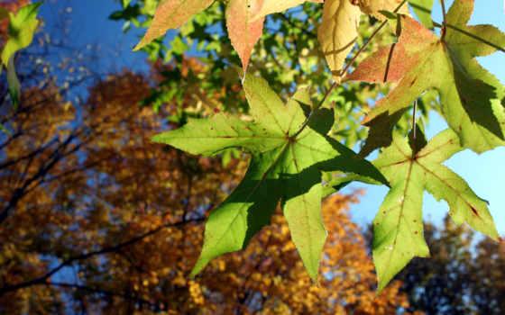 осень, природа, лес