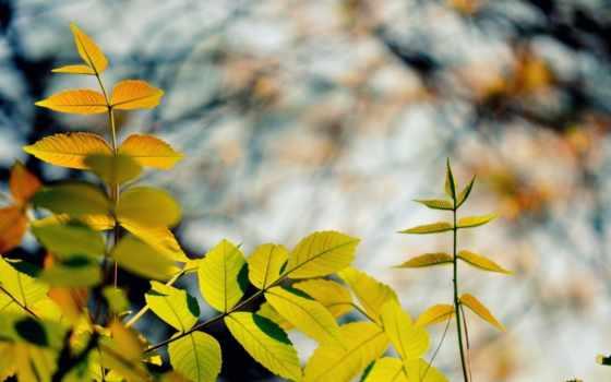 osen, priroda, листья