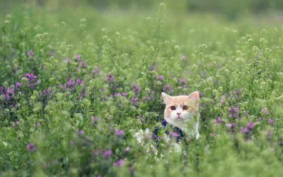 кот, траве, трава