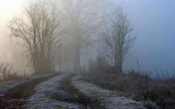 скрипка, oistrakh, concerto, london, matačić, david, prokofiev, туман, trees,