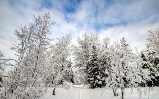 снег, new, год, елка, hutan, salju, dingin, winter, musim, browse, gambar,