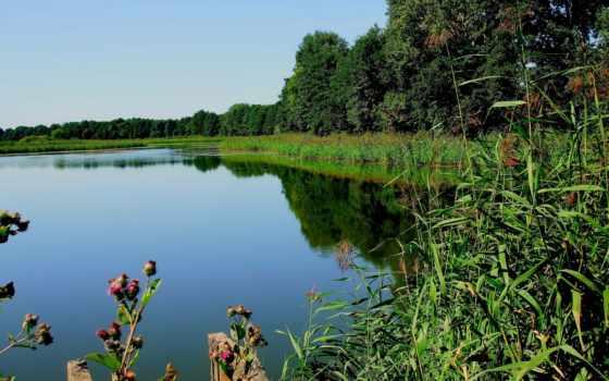 природа, summer, лес, картинка, озеро, трава, категории, реке,