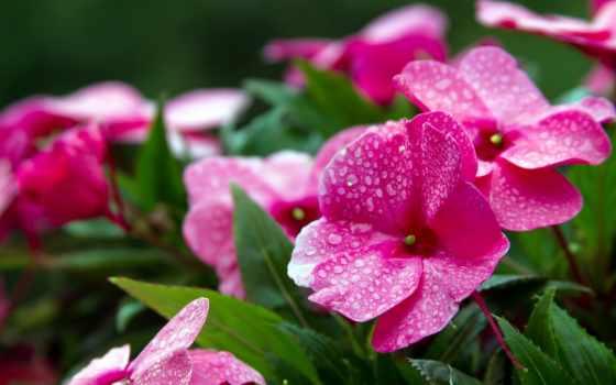 зелёных, among, растущие, росы, утренней, яркий, листьев, разных, разрешениях,