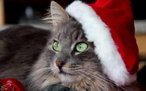 кот, морда, кошками, browse, кошки, world, колпаке,