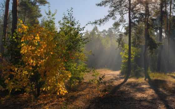 галанзовская, лес, осень, oxana, сентябрь, дымка,