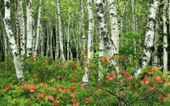 природа, лес, красивые