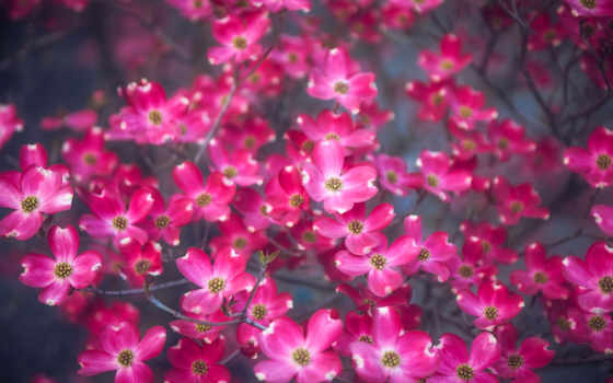 flowers, цветочки, cvety, цветы, телефон, квадро, цветение, free,