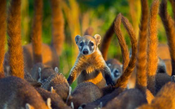 животных, world, living, zhivotnye, весь, divide, растения, очень,