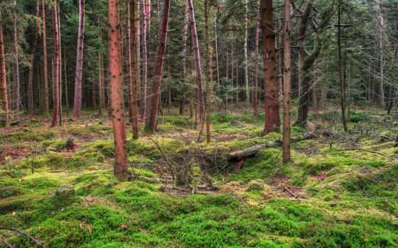 лесные, лес, природа