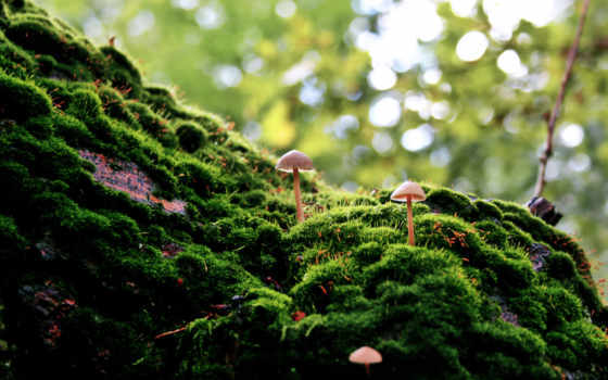 мох, art, лес, pinterest, оптом, aliexpress, стена, об,