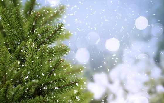 winter, ёль, ветки, холод, зелёный, елка, eli, trees, снег, высоком,